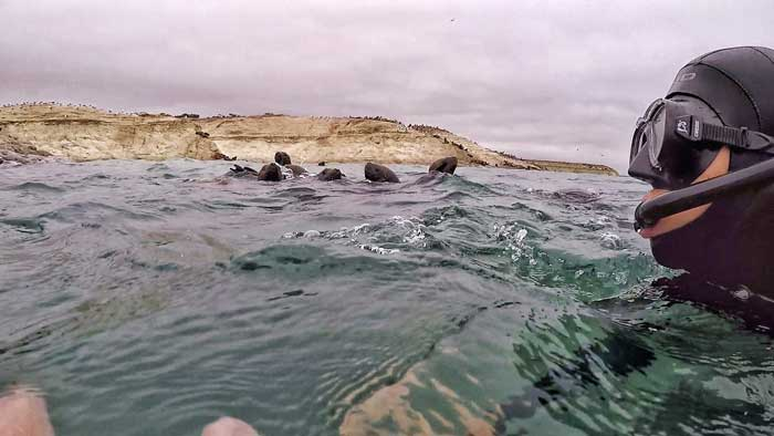 snorkelling-with-sea-lions