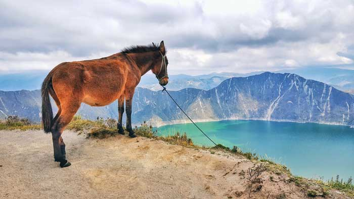 horse-at-quilotoa-crater